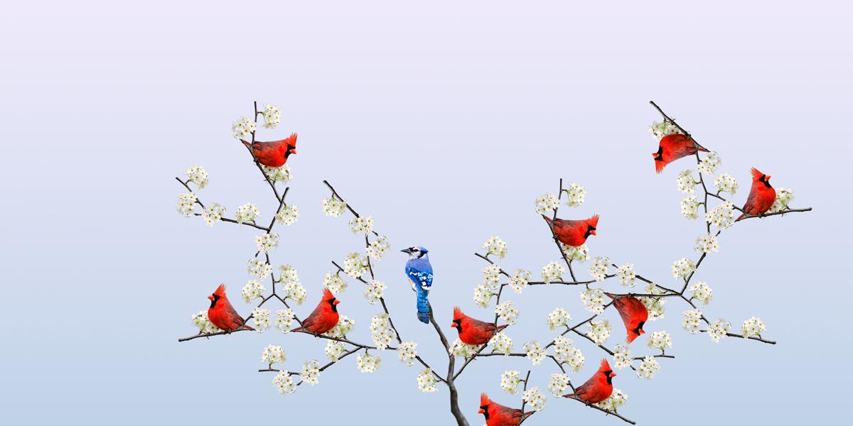 http://www.elranchorelampago.com.ar/files/gimgs/25_13f36568smushpeteribi30x60digitalprint.jpg